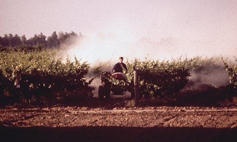 Wonen naast een wijngaard kan gevaarlijk zijn, Franse regering gaat meten