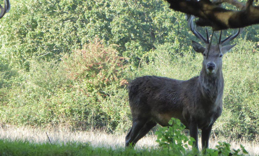 'Eet hert om de nachtegaal te beschermen'