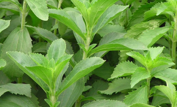 Stevia mag voortaan in de EU