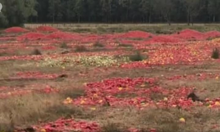 Doorgedraaide groente nieuw zwerfafval in Belgisch natuurreservaat