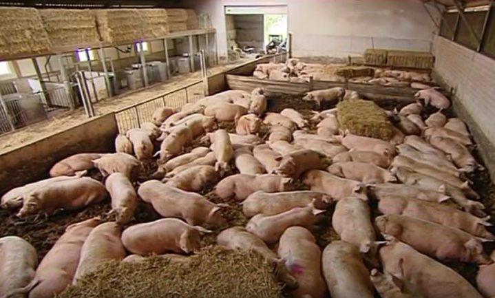 Varkens in Nood stapt opnieuw naar Reclame Code Commissie