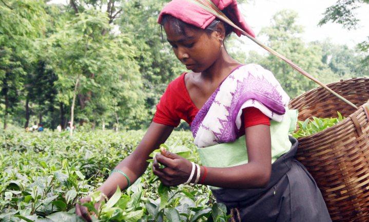 Oxfam Novib blijft onvoldoendes uitdelen aan supermarkten