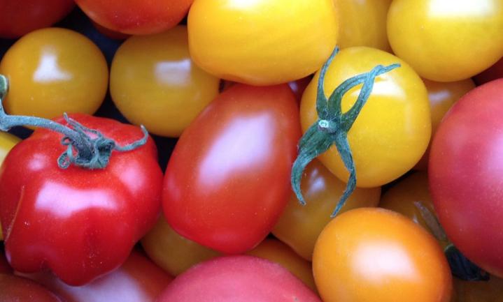 Op zoek naar de Beste Tomaat van Nederland
