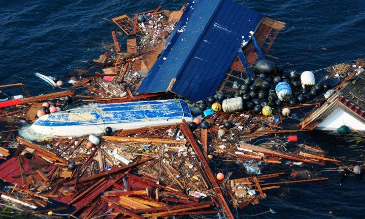 Tsunami drijft honderden verschillende 'exoten' als verstekeling naar VS