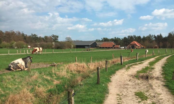'Een consument in Peking is de Nederlandse boer niet trouw'