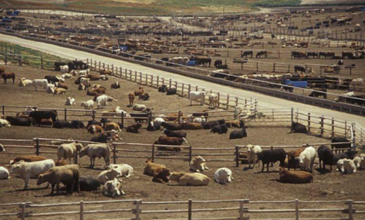 China hervat import Amerikaans rundvlees