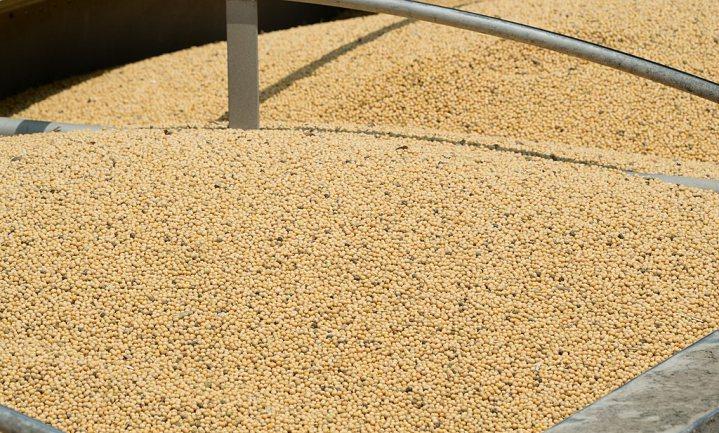 EU hoeft toelating GM-sojaboon niet opnieuw te toetsen, oordeelt het Europees Hof