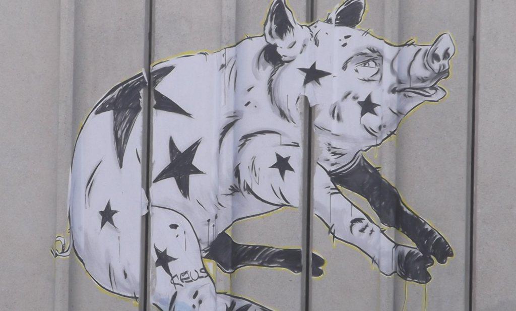 'Rabobank stuurt aan op gedwongen verkoop varkensbedrijven'