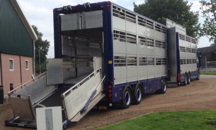 Nederlandse vee-exporteurs wisten van slechte staat rustpunten