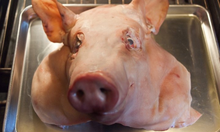 Het Nederlandse varken mag Rusland weer in