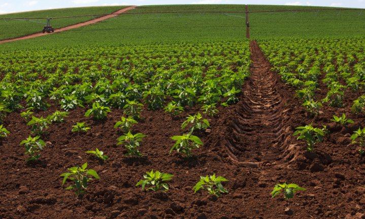 Gebrek aan biodiversiteit bedreiging voor het wereldwijde voedselsysteem, zegt VN