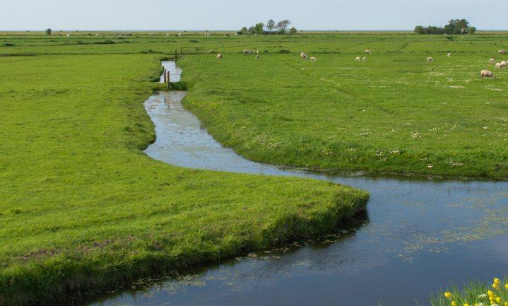 De klimaatvisie van D66 en GroenLinks: nattere weiden, minder koeien, drijvende steden en dorpen