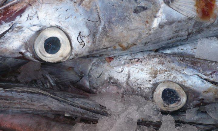 Vissen moeten het goed hebben, vinden 7 van de 10 Nederlanders