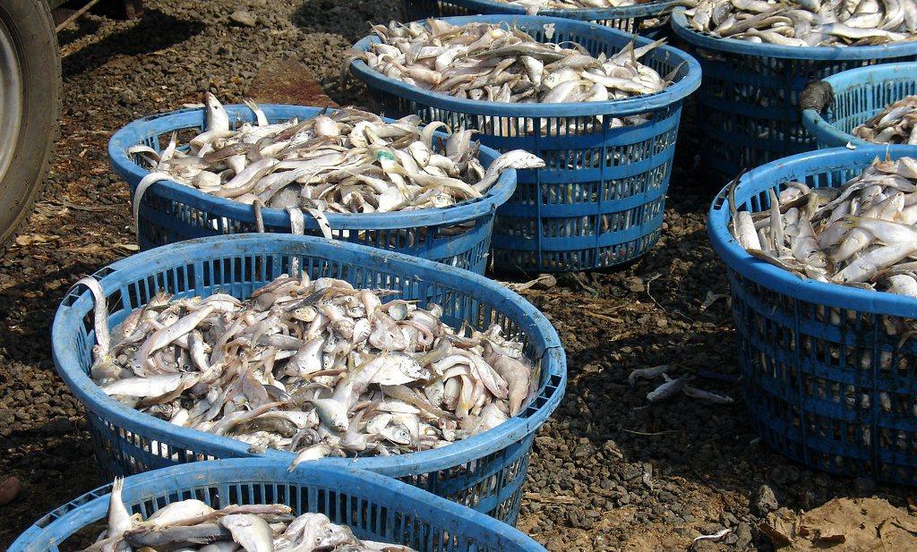 'We komen in 2030 62 miljoen ton vis tekort'