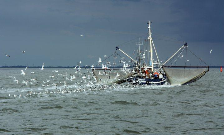 Tijdelijk visakkoord helpt vissers uit de brexitnood
