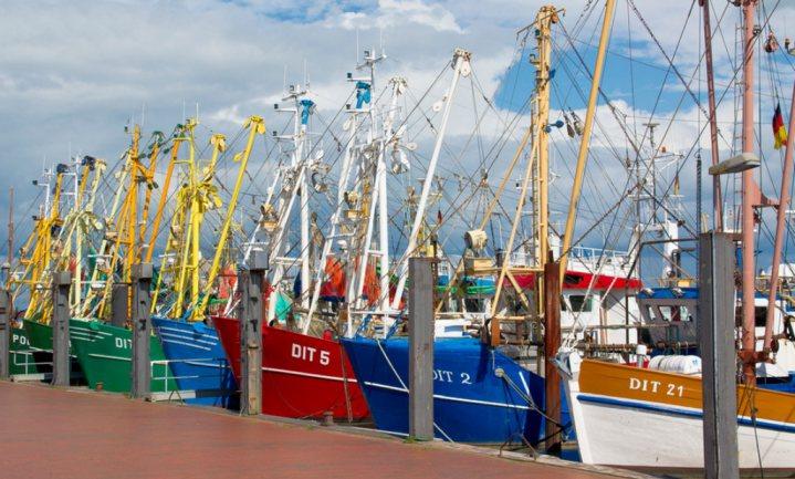 Visbeleid werpt vruchten af, vangstquota kunnen omhoog