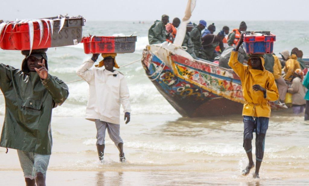 De prijs van sardinella stijgt en China maakt er vismeel van