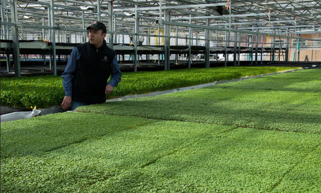 Dijksma: exportkansen voor 'vitaminefabriek Nederland'
