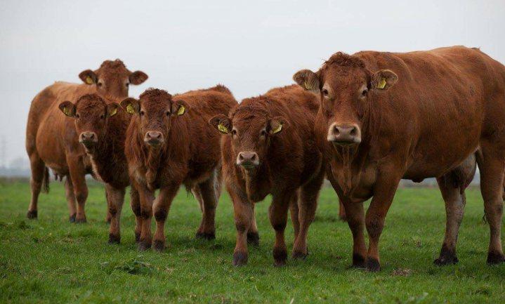 'Greenpeace berekent uitstoot veehouderij verkeerd'