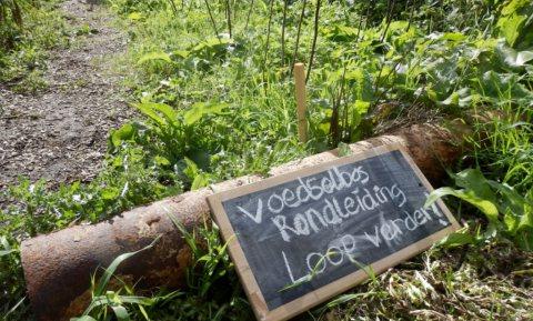 De bedrijfskundige realiteit van voedselbossen