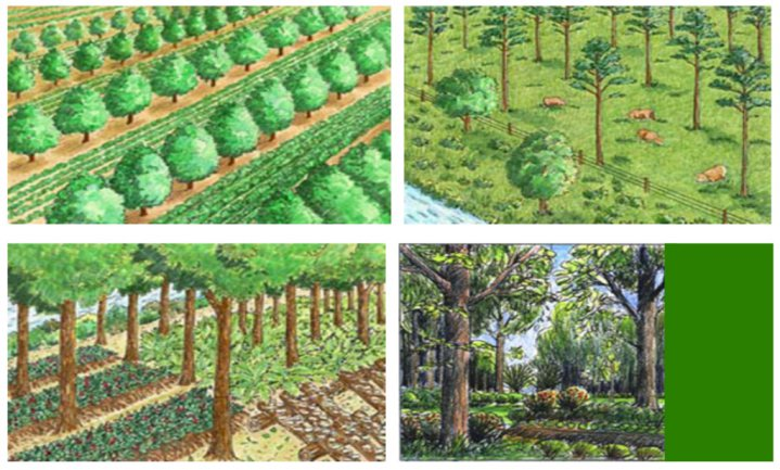Bosbouwboeren gezocht voor natuur die wat oplevert