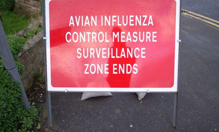Vogelgriep in Deurne en Hongarije