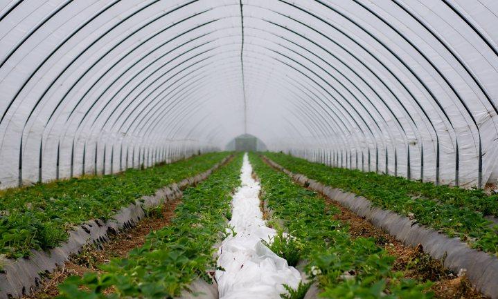 Business scenarios for Sub-Saharan Africa and Dutch horticulture