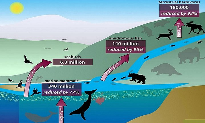 Grote zeedieren essentieel in fosforkringloop