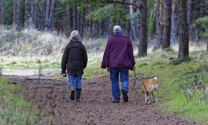 Loslopende honden jagen bang wild de bewoonde wereld in