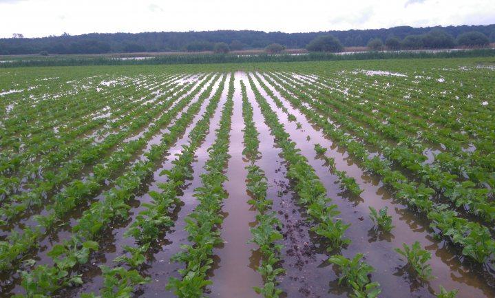 Drie scenario's voor onze landbouw