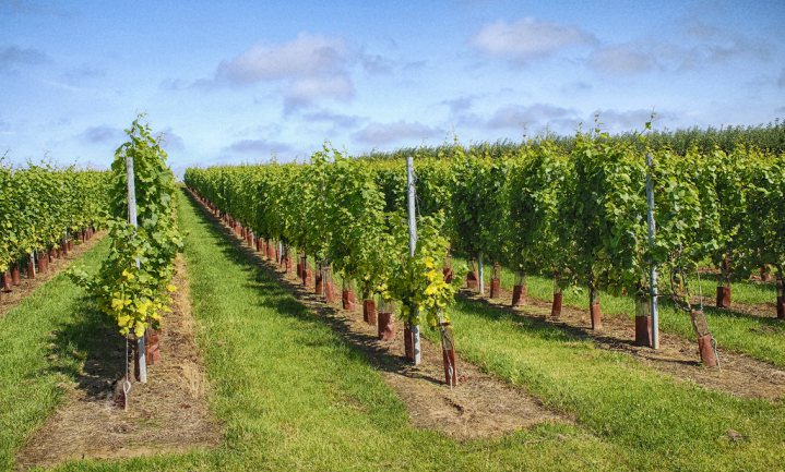Eerste grensoverschrijdende BOB voor Nederlandse en Belgische wijn