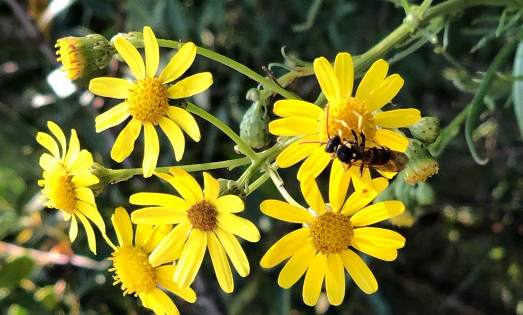 Bee Guidance of Beehave? Modellenstrijd in de Tweede Kamer
