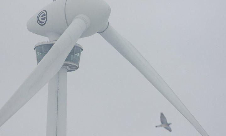 Klimaatverandering gaat te snel voor vogels