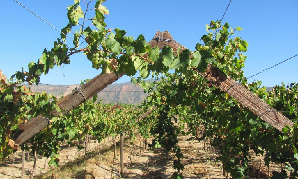 Zuid Afrika weet: zonder water geen wijn