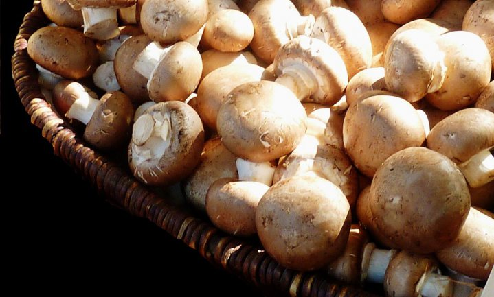 Gezondste paddenstoelen komen uit magnetron