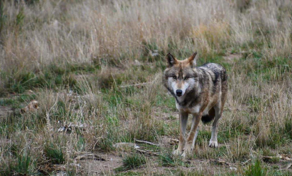 België op zoek naar de moordenaar van wolf Naya