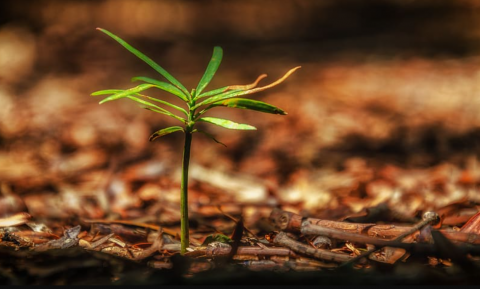 Waarschuwing: bos als goedmaker voor klimaatprobleem creëert honger