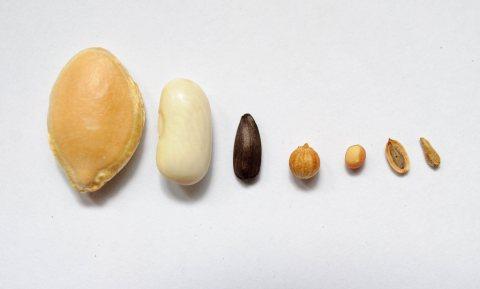 Italië haalt streep door verkoop zadenproducent Verisem aan Chinezen
