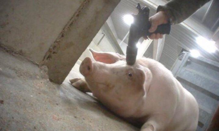 Zorgen om het wereldbeeld dat Animal Rights en Ouwehand oproepen