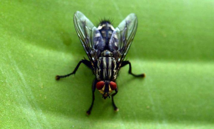 'Ziekteverwekkers pakken de vliegentaxi om zich te verplaatsen'