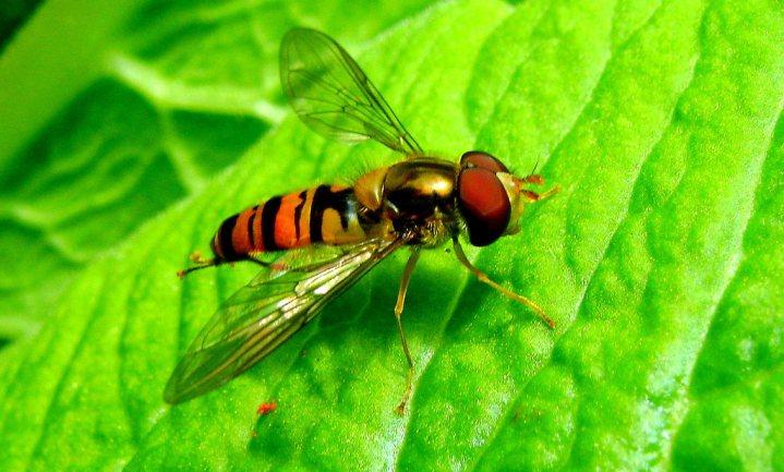 Afname insecten haalt nu ineens wel de wereldpers